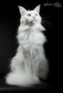 katten workshop 006