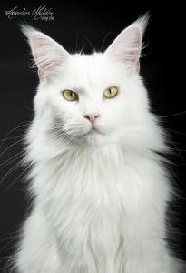 katten workshop 074