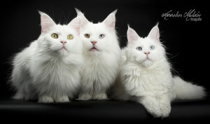 katten workshop 124