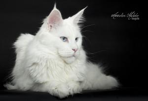 katten workshop 137